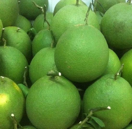 địa chỉ mua buwoir da xanh giá tốt tại thành phố Hồ CHí Minh